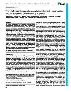 The LINC complex contributes to heterochromatin organisation and
